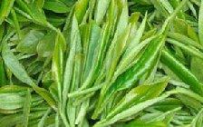 毛尖茶叶的功效对人体有哪些好处