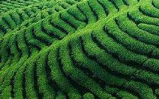 好的毛尖茶叶多少钱一斤?