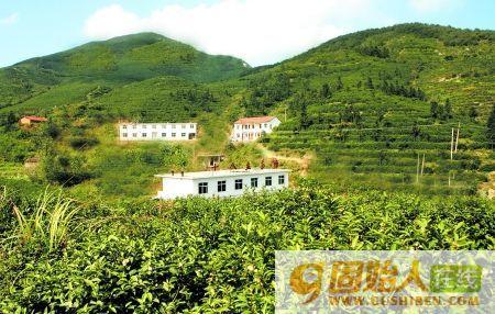十八盘毛峰-中国优质产品