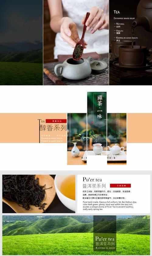 云雾毛尖绿茶茶叶价格