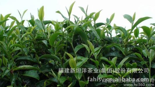茶叶正山小种多少钱一斤